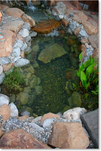 This pond is about 600 gallons and contains fish and tadpoles.